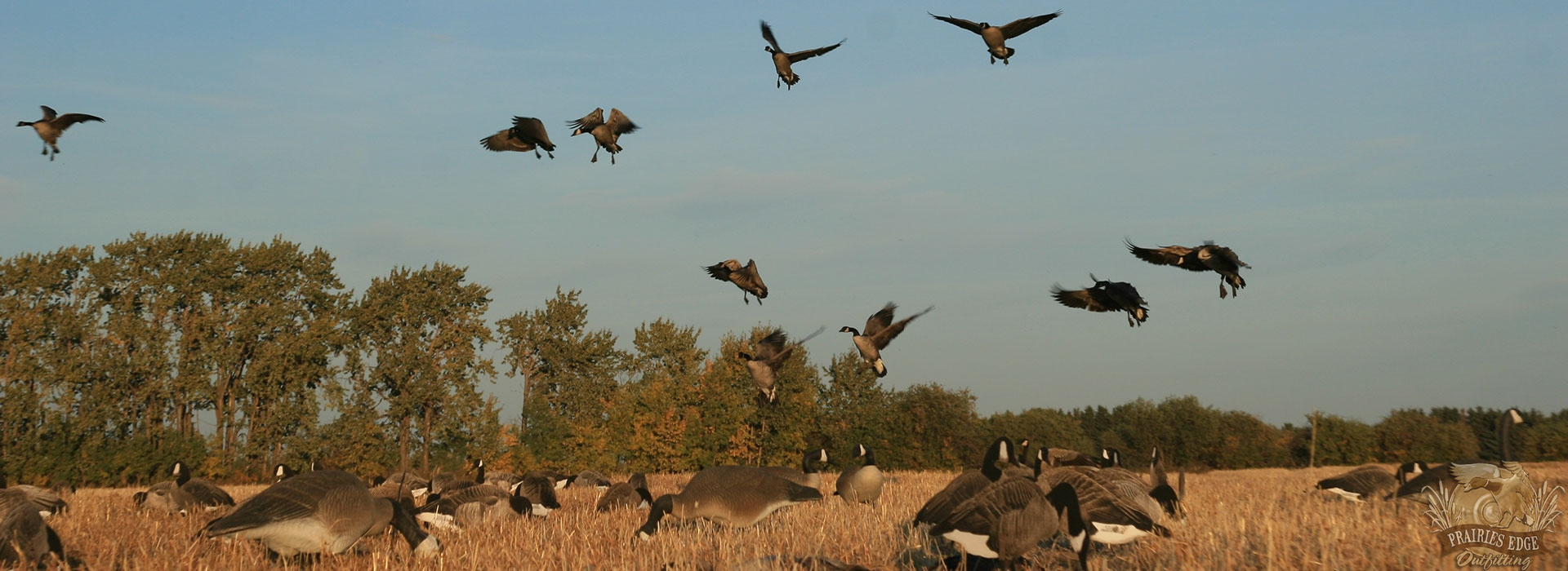 Choosing A Canada Waterfowl Hunting Outfitter