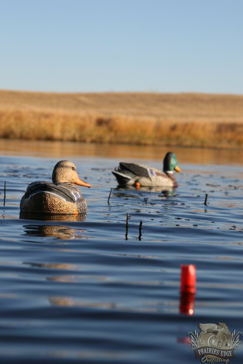 Duck Hunts Goose Hunts Saskatchewan